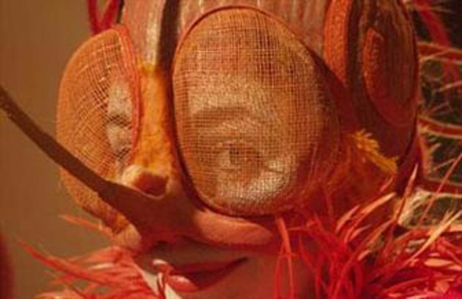 Erik Of Het Klein Insectenboek Trailer Reviews Meer Pathé