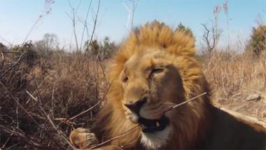 African Safari 3D - exclusieve clip