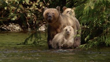 Bears trailer 1