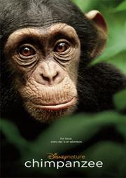 Chimpanzee poster 1