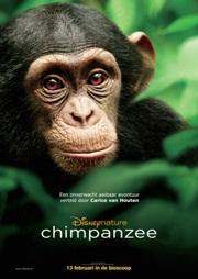 Chimpanzee poster 3